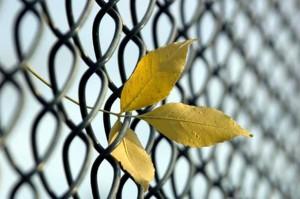 Blatt im Zaun