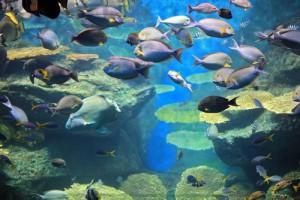 Fische-im-Wasser