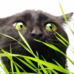 Katze-3